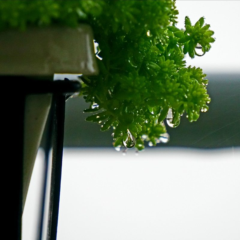 Close up of window box planter & green plant with rain drops on leaves