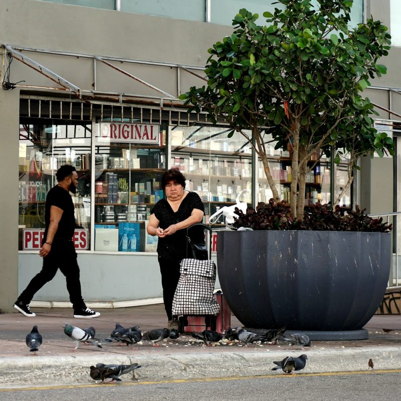 Woman feeding pigeons on a downtown Miami street