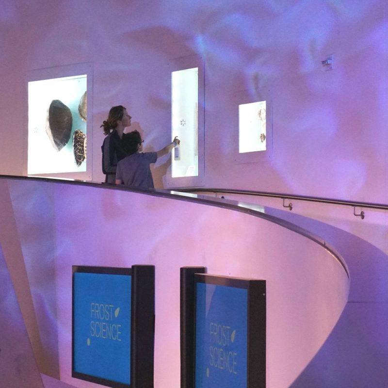 """Mother and son looking at a display on exhibit """"From the Curious Vault"""" at the Phillip and Patricia Frost Museum of Science"""
