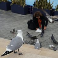 Feeding seagulls at Bayside Marketplace Marina Stage