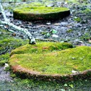 Close up of two round stepping stones covered with deep green moss