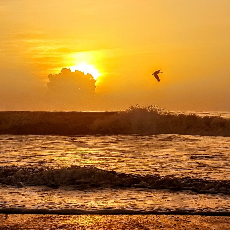 Brilliant gold sunrise at the beach with waves, clouds and a seagull flying