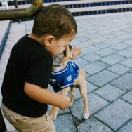 Chihuahua in a blue dog jersey licking a small boy's face while he laughs